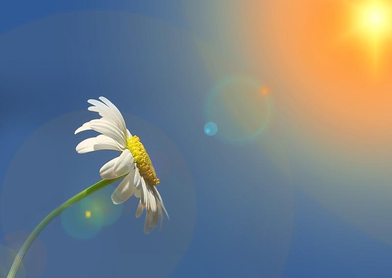 cvetok i solnce